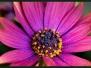 Fotoalbum Florales