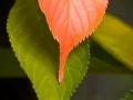 Symmetrische Blätter