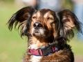 Durchgeistigte Hunde-Entrückung
