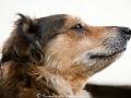 Reifes Hundegesichtchen