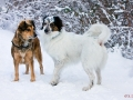 Zufallsbekannschaft im Winterwald