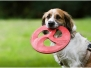 Polja und die Doggy Disk