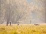Fotoalbum Landschaft