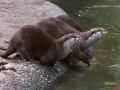 Otter-Diagonale