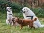Herbstwanderung Hundespass-AG