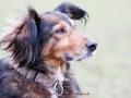 Definitiv die schönsten Hundeohren