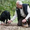 Trüffelsuche mit Hund Farah